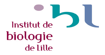 logo-ibl
